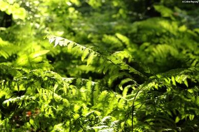 Nature9