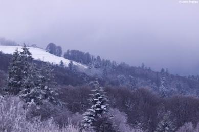 Massif des Vosges, France